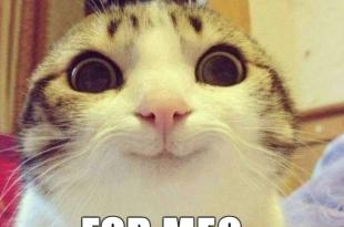 iodomains-cat